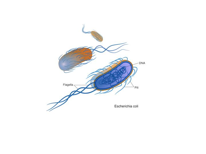 m8d1 microbes and the environment