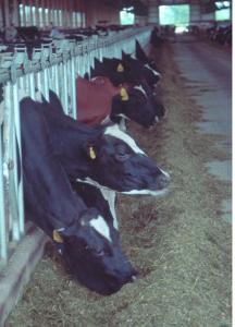 CAFO - USDA photo
