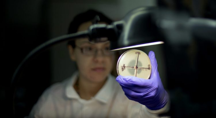 Microbiologist Tatiana Travis reads a plate to check on a bacterium's resistance to a carbapenem antibiotic in an antimicrobial resistance and characterization lab within the Infectious Disease Laboratory at the federal Centers for Disease Control and Prevention, Monday, Nov. 25, 2013, in Atlanta. (AP Photo/David Goldman)