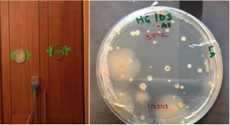 Genomes of eight bacteria from the built environment