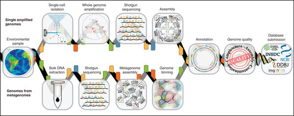 New standards recommendations on minimum information about a single amplified genome (MISAG) and a metagenome-assembled genome (MIMAG) of bacteria and archaea
