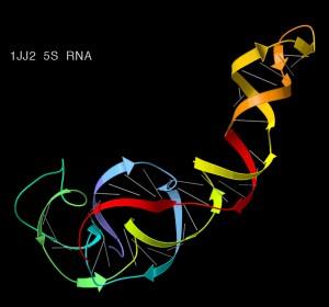 5S_ribosomal_RNA_ribbons