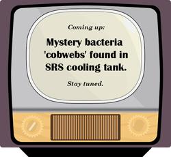 Mystery Bacteria