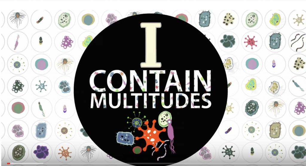 Ed Yong Contains Multitudes and So Do You. The Videos. Part 1. Termites.